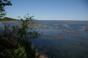 Eastern Shore National Wildlife Refuge
